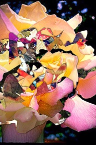A spiraling collage of bright flower petals in yellow, orange, peach, pink against a dark background w/ spatters of blue